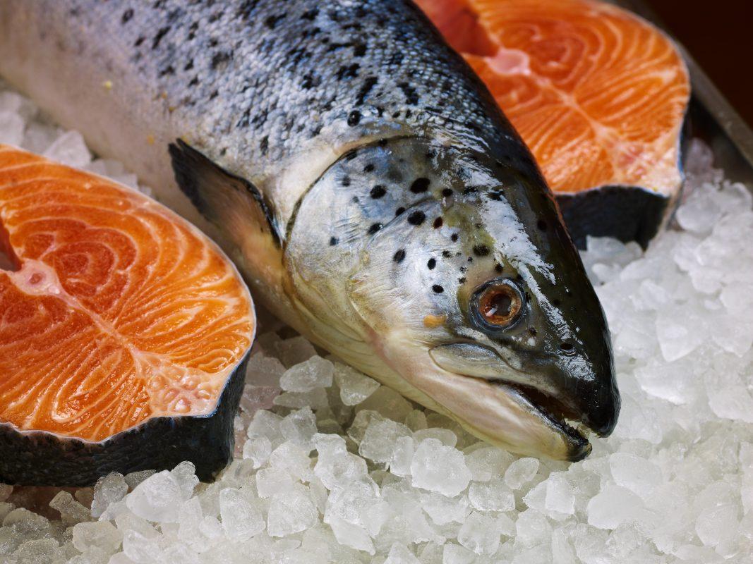 Sudah Tau ? Ini Loh Karakteristik Daging Ikan Salmon